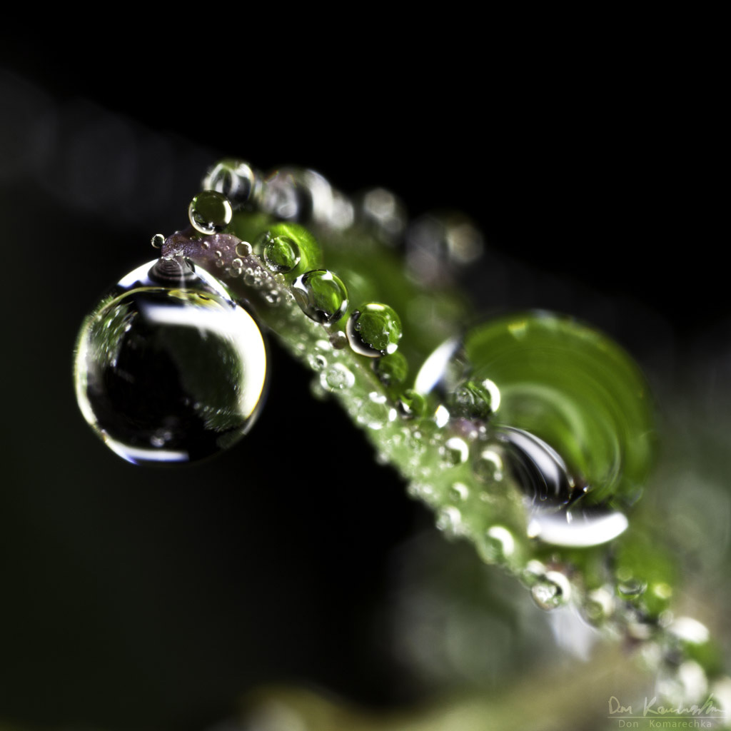 IMAGE: http://don.komarechka.com/images/potn/droplets/leaf-droplets3_3x.jpg