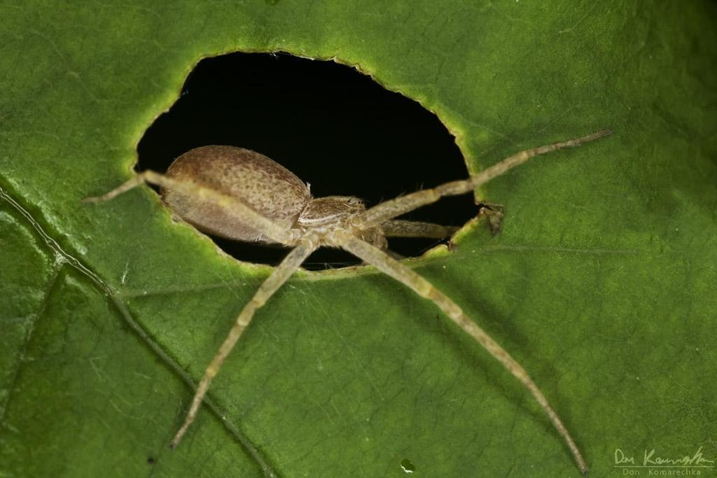 IMAGE: http://don.komarechka.com/images/potn/spiders/_MG_0137.jpg