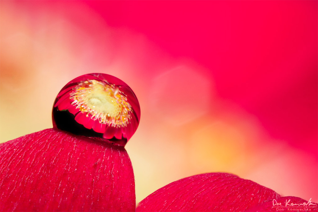IMAGE: http://don.komarechka.com/images/potn/spring-drops/flower-droplet.jpg