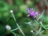 Wildflowers 8
