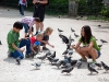 Children playing with pigeons
