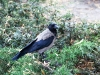 Bird in the Park