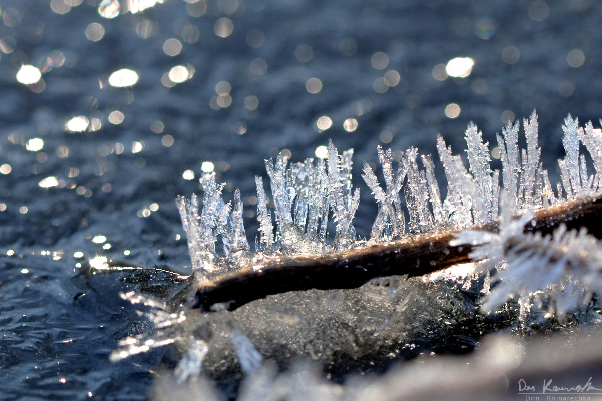Spikes of hoarfrost formed on a branch, which is now frozen to the surface of the pond.