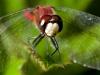 Hunter's Wings