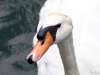 London Swans