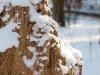 Frozen stump