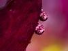 Four Drops