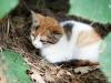 Another Kitten
