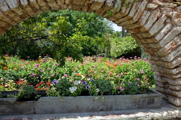 Flowers through the arch