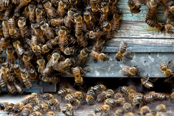 Bees and more bees