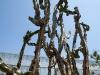 Tall Cactus