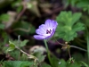 Purple flower on our way back