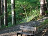 Trailside bench
