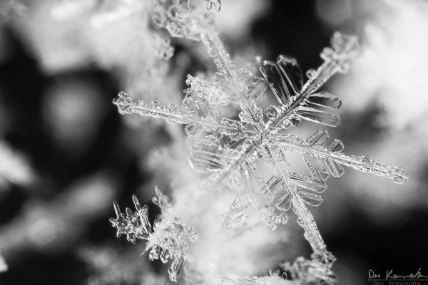 Focus-stacked Snowflake