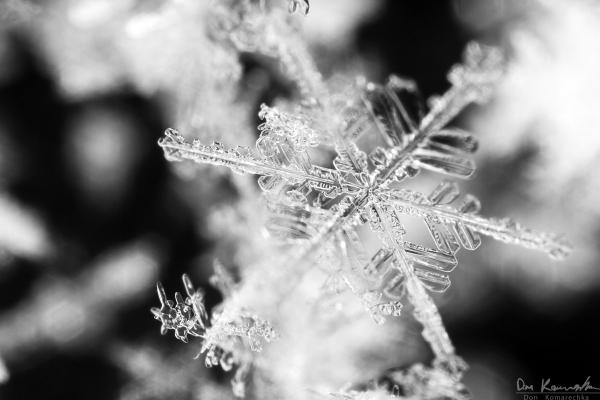 Standard snowflake