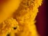 More Pollen