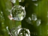 More Dew Drops