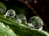 Even more droplets
