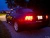 Mustang Back Angle