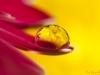 flower-drop