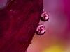 four-drops