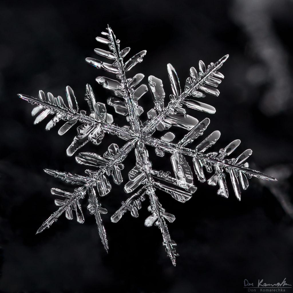 Real Snowflake Falling