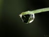 Another Droplet