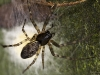 Mother Spider