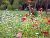 Romanian flower bed